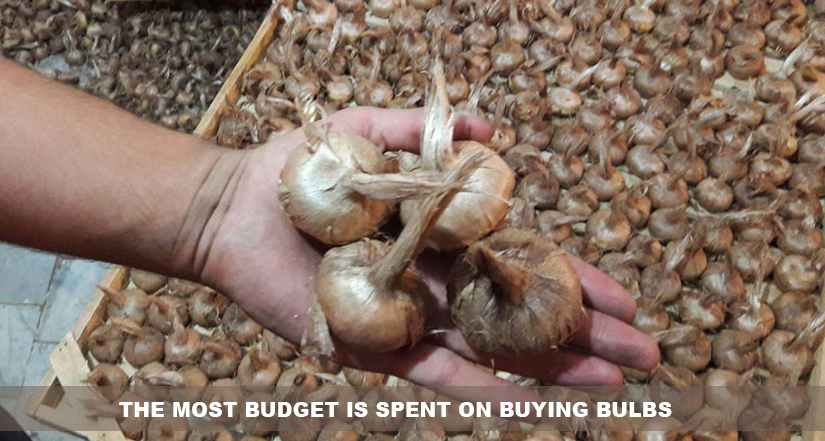 The most budget is spent on buying bulbs