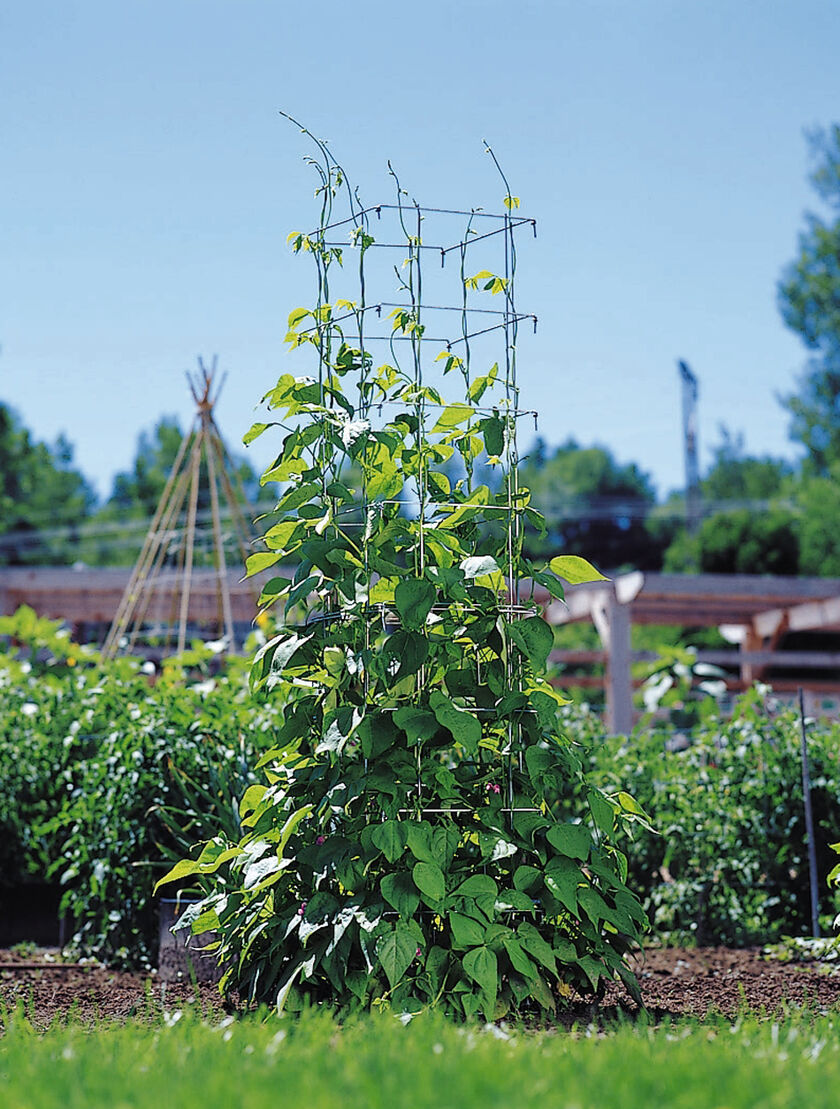 Vegetable Cages and Bean Towers