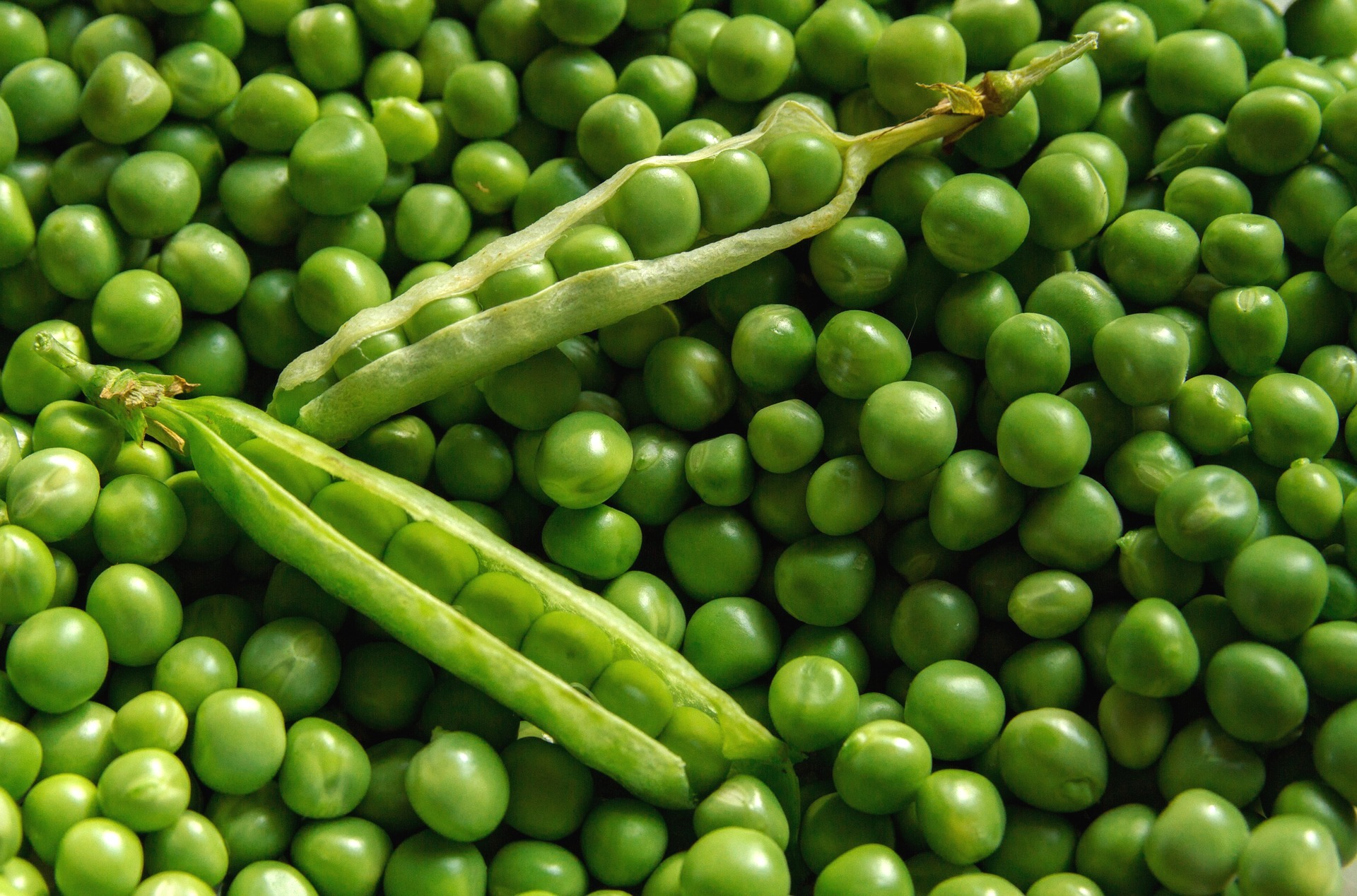 peas-and-pea-pods